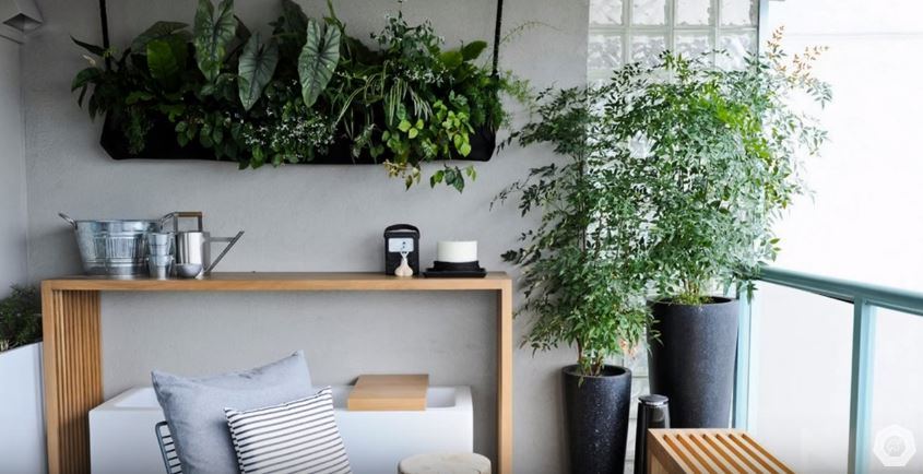 apartment living with plants